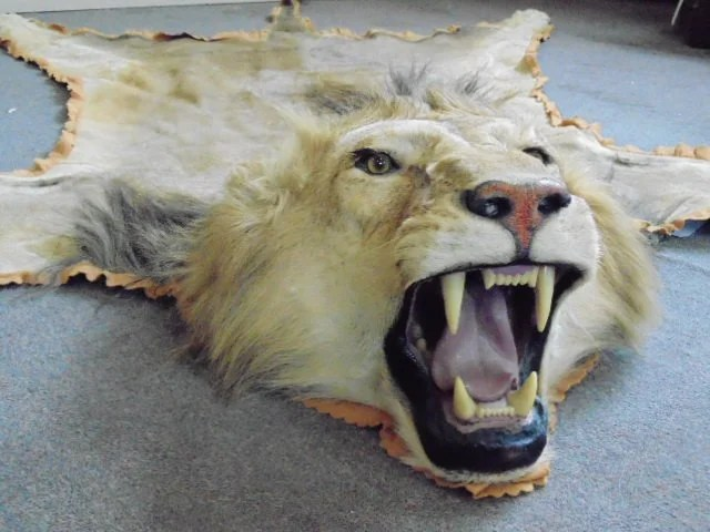 Lion Head Rugs Area Rug Ideas