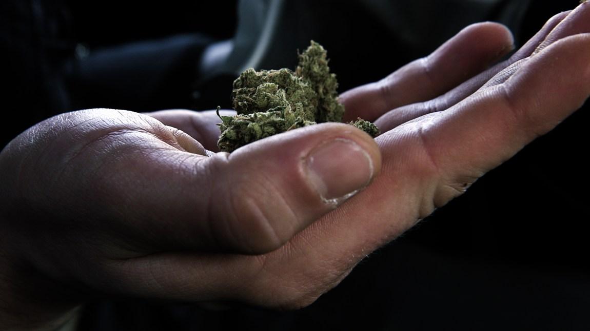 Slik ser cannabisplanten ut når Jørgen henter det ut fra apoteket i Nederland. Denne kommer fra produsenten Bedrocan (Foto: Stine Holme).