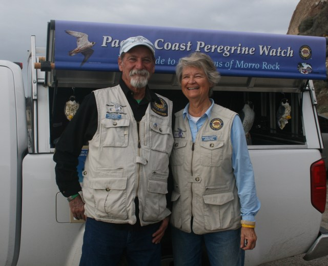 Pacific Coast Peregrine Watch, Bob Isenberg and Heather O'Connor