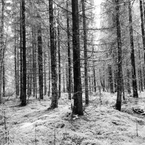 Black and white woods photograph