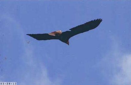 eagle7