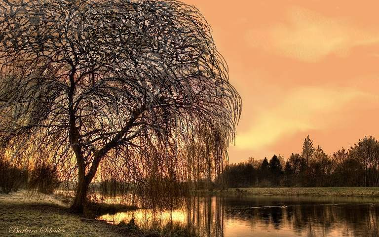 Fall The Sun Wallpaper Weeping Willow At Dawn Show Your Essentials Creations
