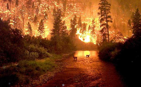 montana_fire_big
