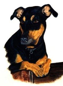 082906_tinker-bachant-pet-painting