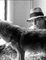 beuys-coyote