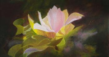 zidonja_magnolia-joy
