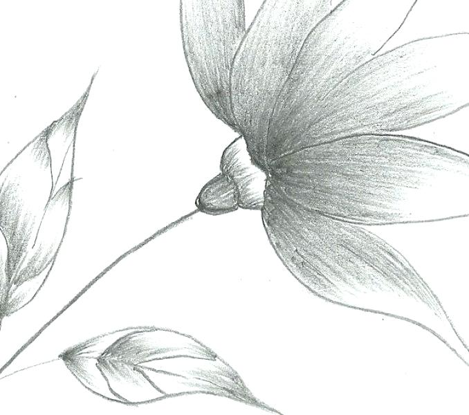 Easy Sketch Flowers at PaintingValley Explore collection of