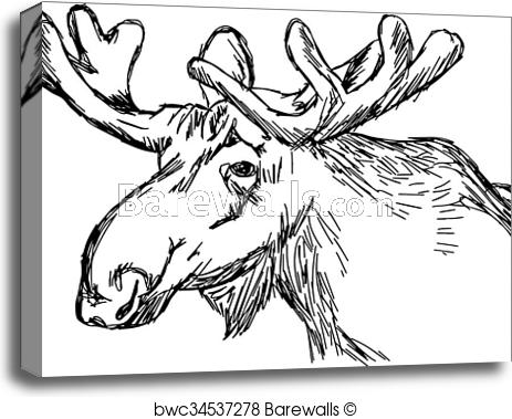 Whitetail Deer Drawings Fine Art America template definition