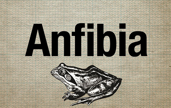 featured-image-anfibia