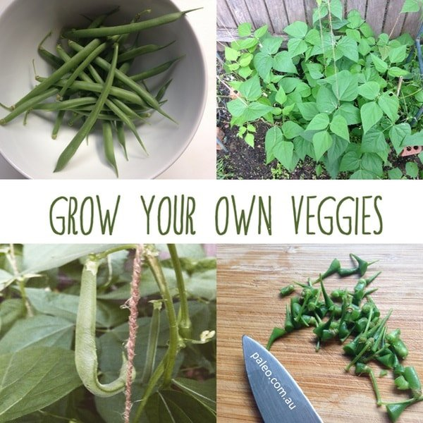 Grow your own veggies vegetable patch organic gardening Paleo Network