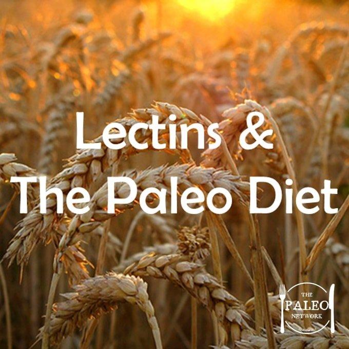 The Paleo Diet Lectins Grains Gluten Wheat-min