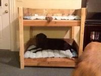 DIY Pet Bunk Bed - Plans to Build Dog Bed | Pallet ...