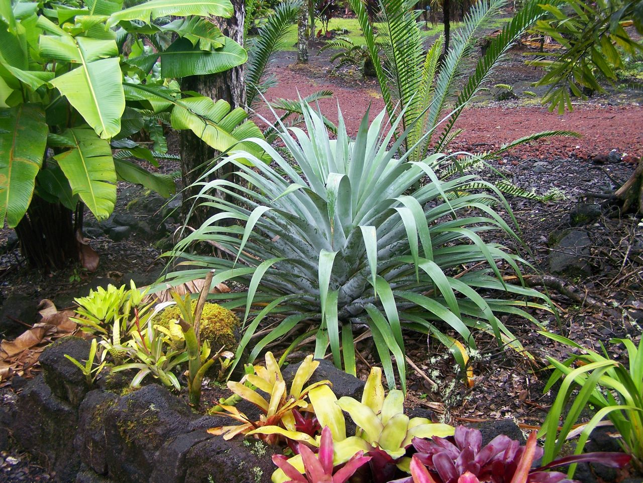 Cool Looking Plants Wierdest Coolest Bromeliads Tropical Looking Plants