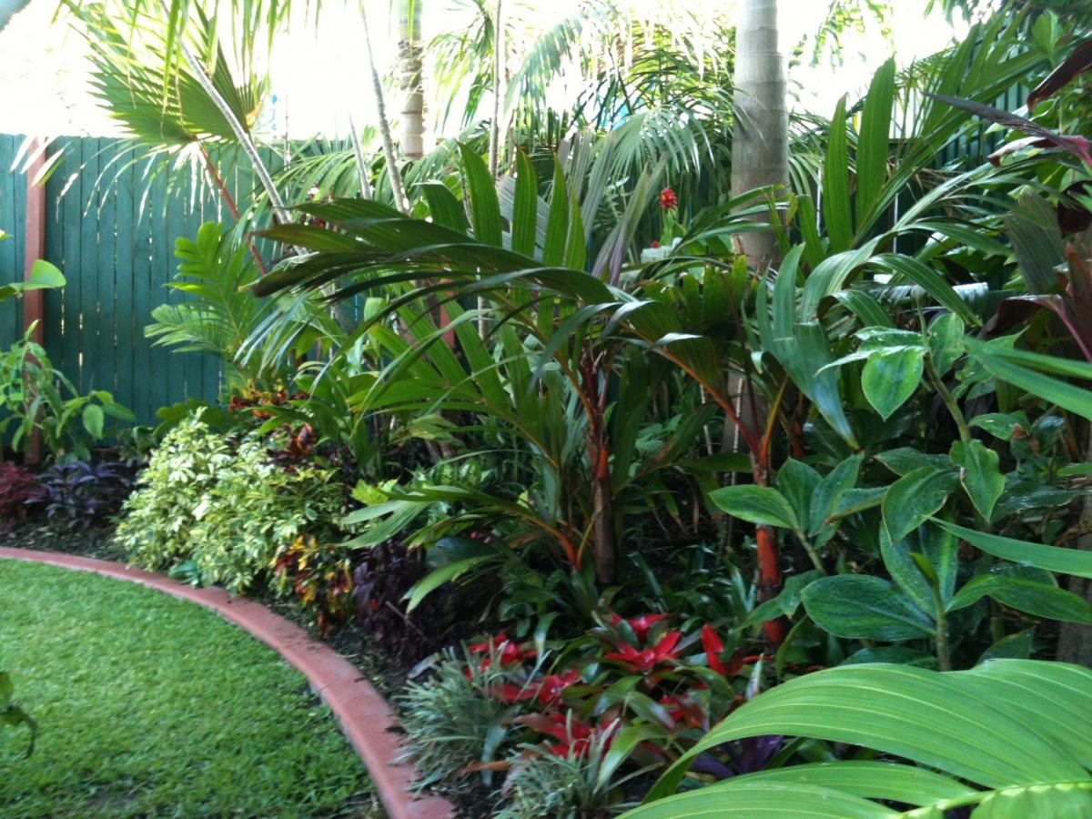 Areca Palm Australia Another Brisbane Garden Discussing Palm Trees Worldwide