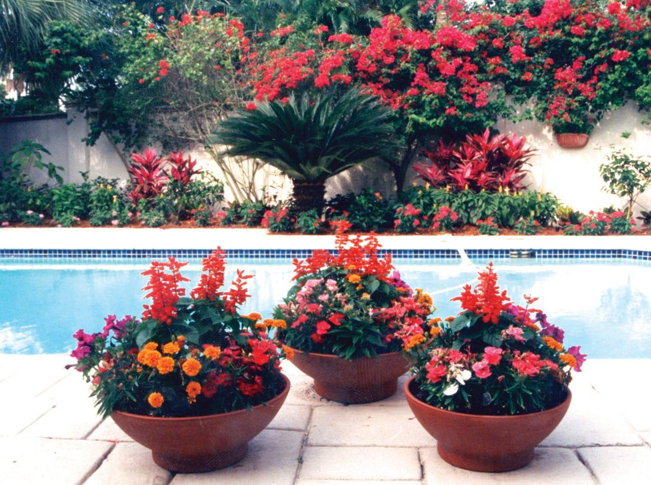 Container Gardens Palm Beach Landscape Designer Pamela