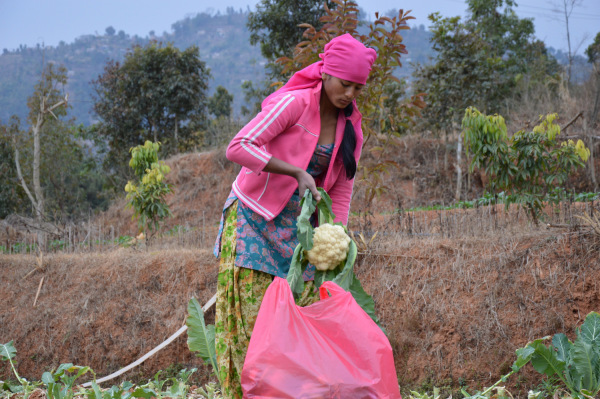 A farmer packs cauliflowers in a polythene bag for transporting to local vegetable market in the scenic mountain village of Lamdihe, near Dhulikhel town, some 30 km (18.6 miles) southeast of Nepal's capital, Kathmandu. TRF/Saleem Shaikh