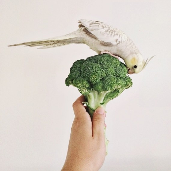 Broccoli Buttercup