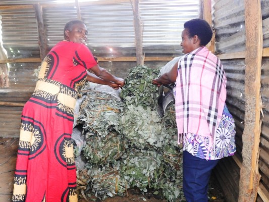 Ibikorwa byose barabifatanya. Ukeneye amakara ntibagombera gushaka umukozi. (Photo/Panorama)