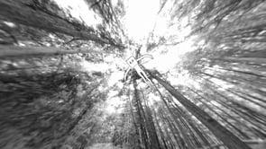 Passeig en 360º pel bosc: Way to Go