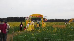 横浜町 菜の花