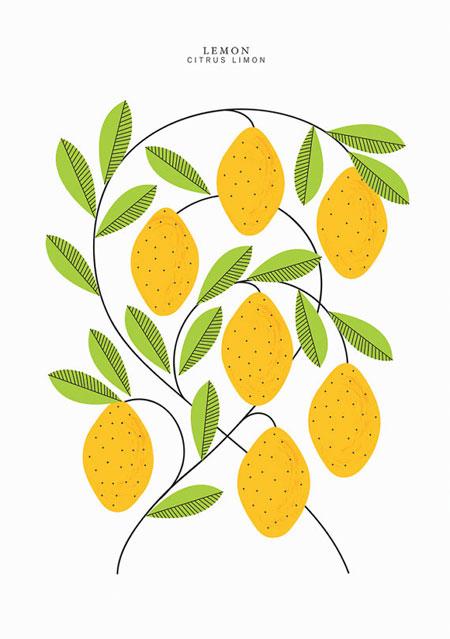 A3 Lemons Print | Sarah Abbott