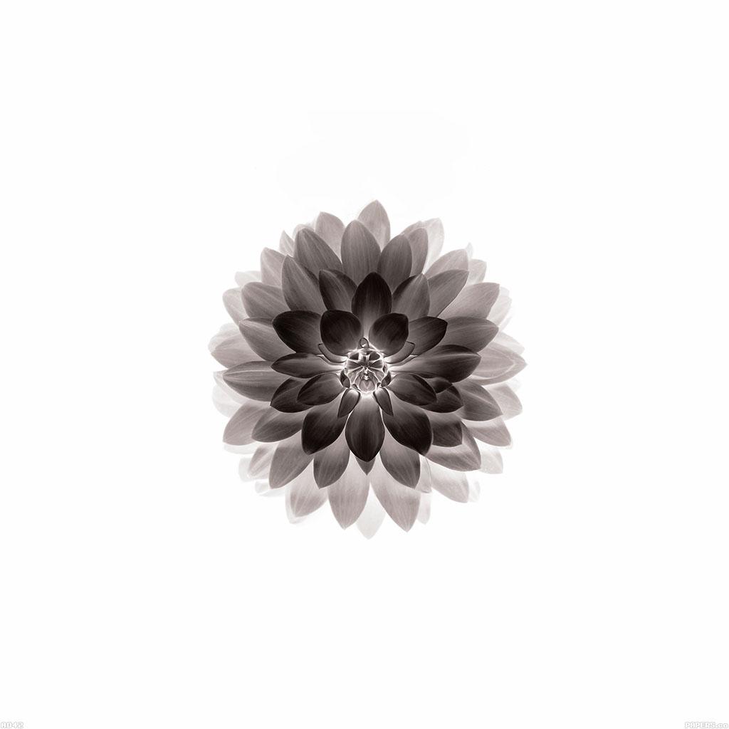Fall Sunflower Wallpaper Ipad Retina
