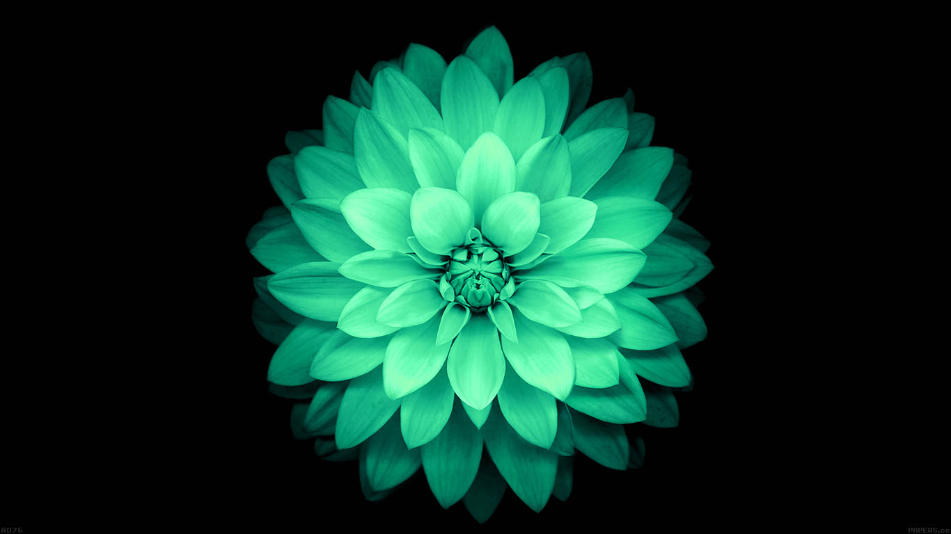 Iphone Ios 4 Wallpaper Ad76 Apple Green Lotus Iphone6 Plus Ios8 Flower Papers Co