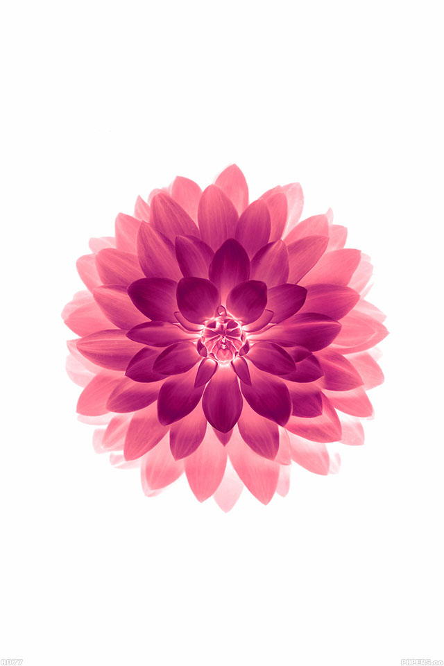 Ios 11 4 Wallpaper Iphone X Ad77 Apple Red On White Lotus Iphone6 Plus Ios8 Flower