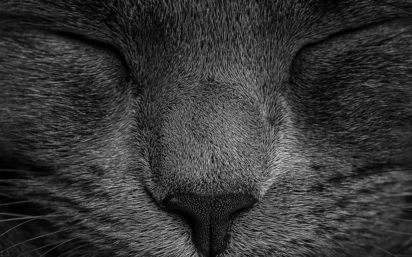 Pattern Iphone 5 Wallpaper Ae80 Sleeping Black Cat Zoom Nature Wallpaper