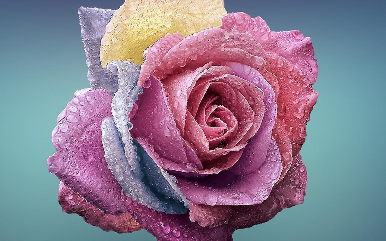 Iphone X Logo Wallpaper Be61 Flower Rose Art Illustration Wallpaper