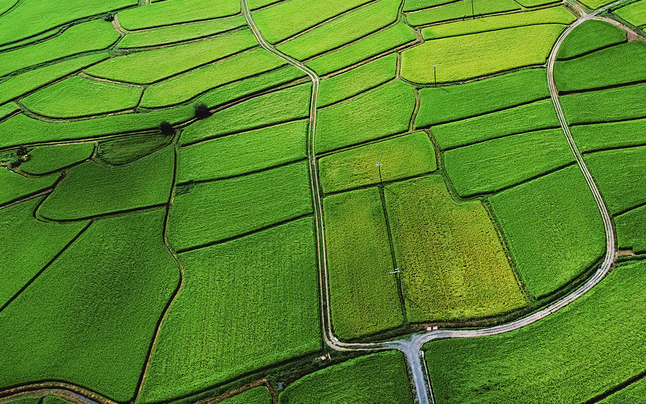 Mac Pro Fall Wallpaper 2017 Mb57 Wallpaper Rice Paddy Field Nature Papers Co