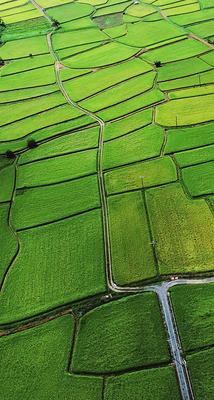 Green Wallpaper Iphone 5 Freeios7 Mb57 Wallpaper Rice Paddy Field Nature