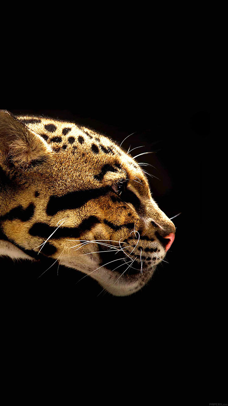 Hd 3d Droid Wallpapers Mb77 Wallpaper Wild Cat B Animal Papers Co