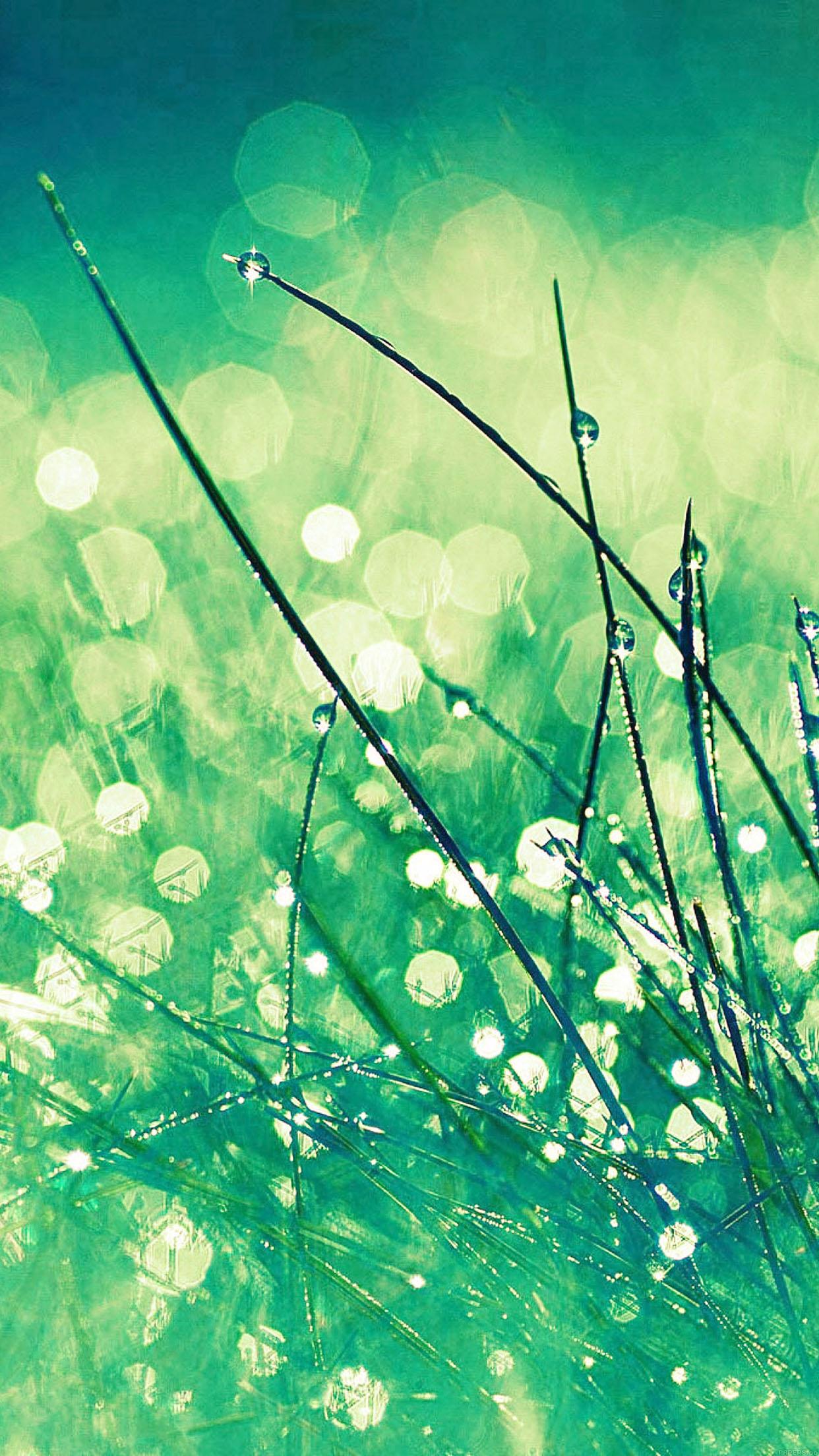 Lg Optimus 3d Wallpaper Mc02 Wallpaper Grass Dew Greener Leaf Papers Co