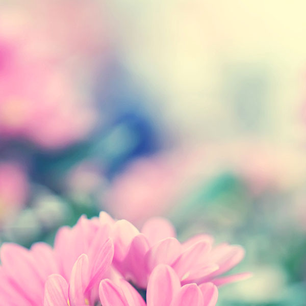 Apple Iphone 5s Wallpaper Hd Download Mc22 Wallpaper Boo 184 Flower Pink Blurred