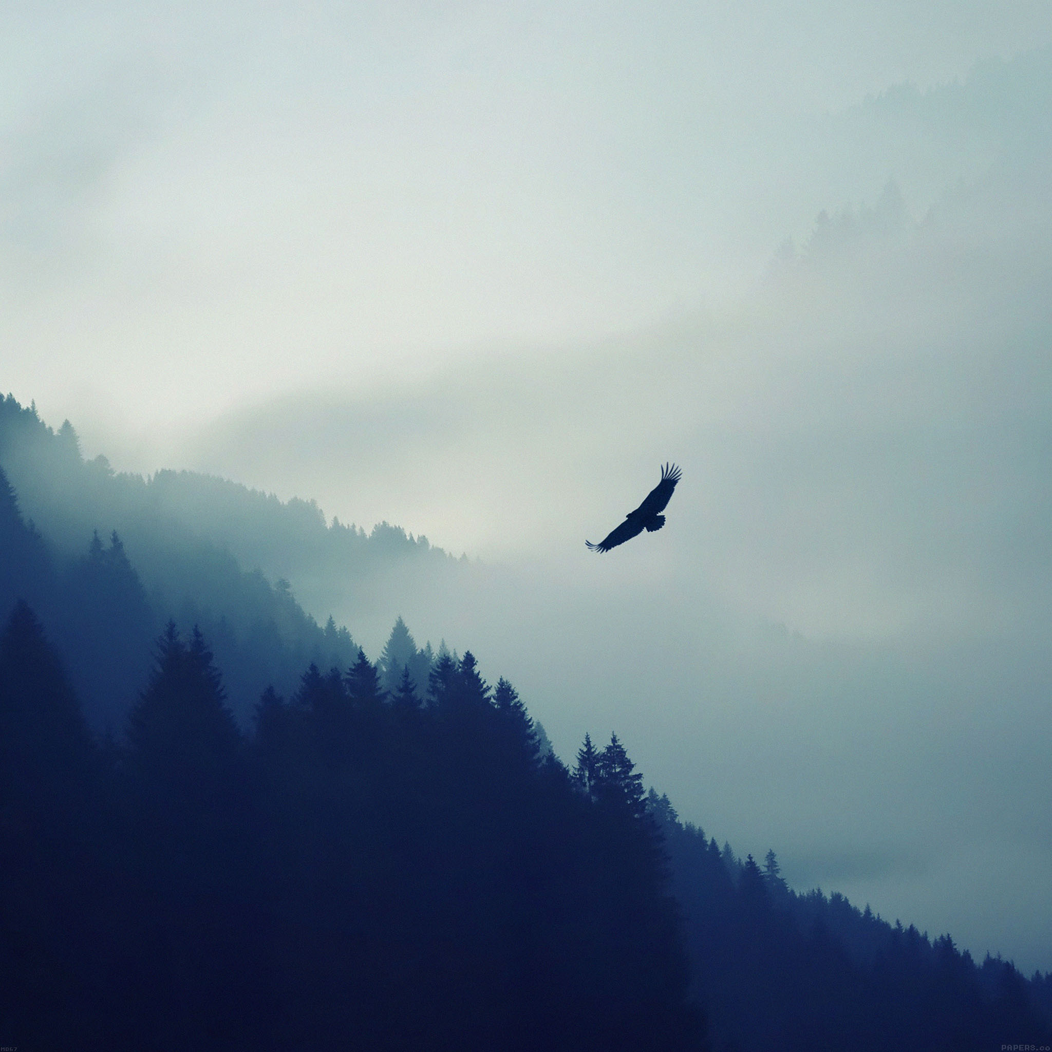 4k Laptop Wallpaper Fall Forest Freeios7 Md67 Eagle Mountain Fly Animal Parallax Hd