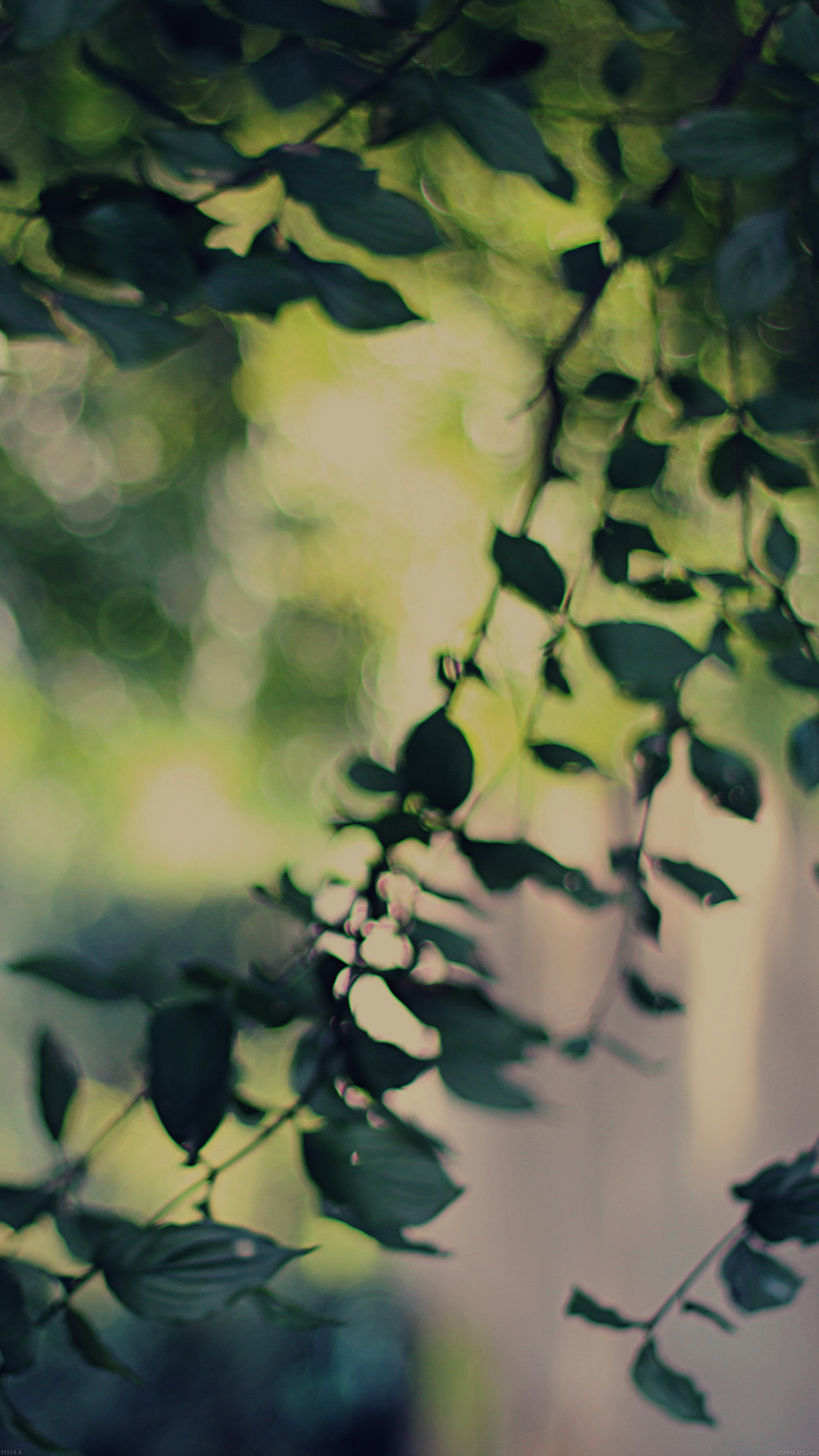 Android Phone Fall Wallpaper Mh44 Tree Bokeh Calm Lovely Morning Nature Park Wallpaper