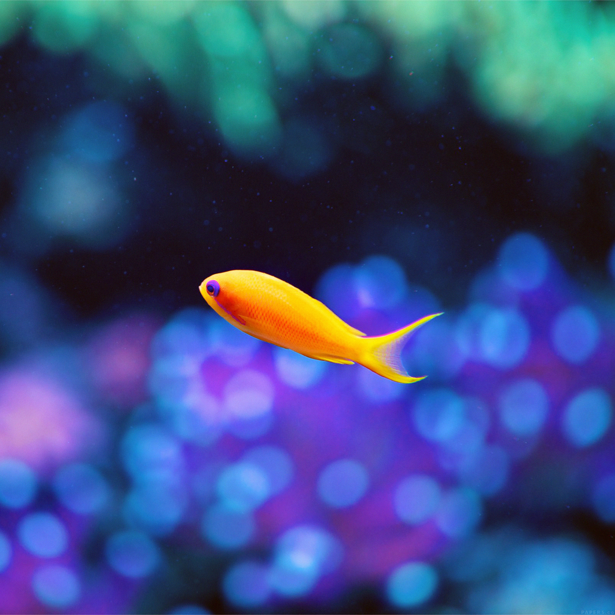 Classic Car Pictures Wallpaper Mj49 Cute Fish Nemo Ocean Sea Animal Nature Wallpaper