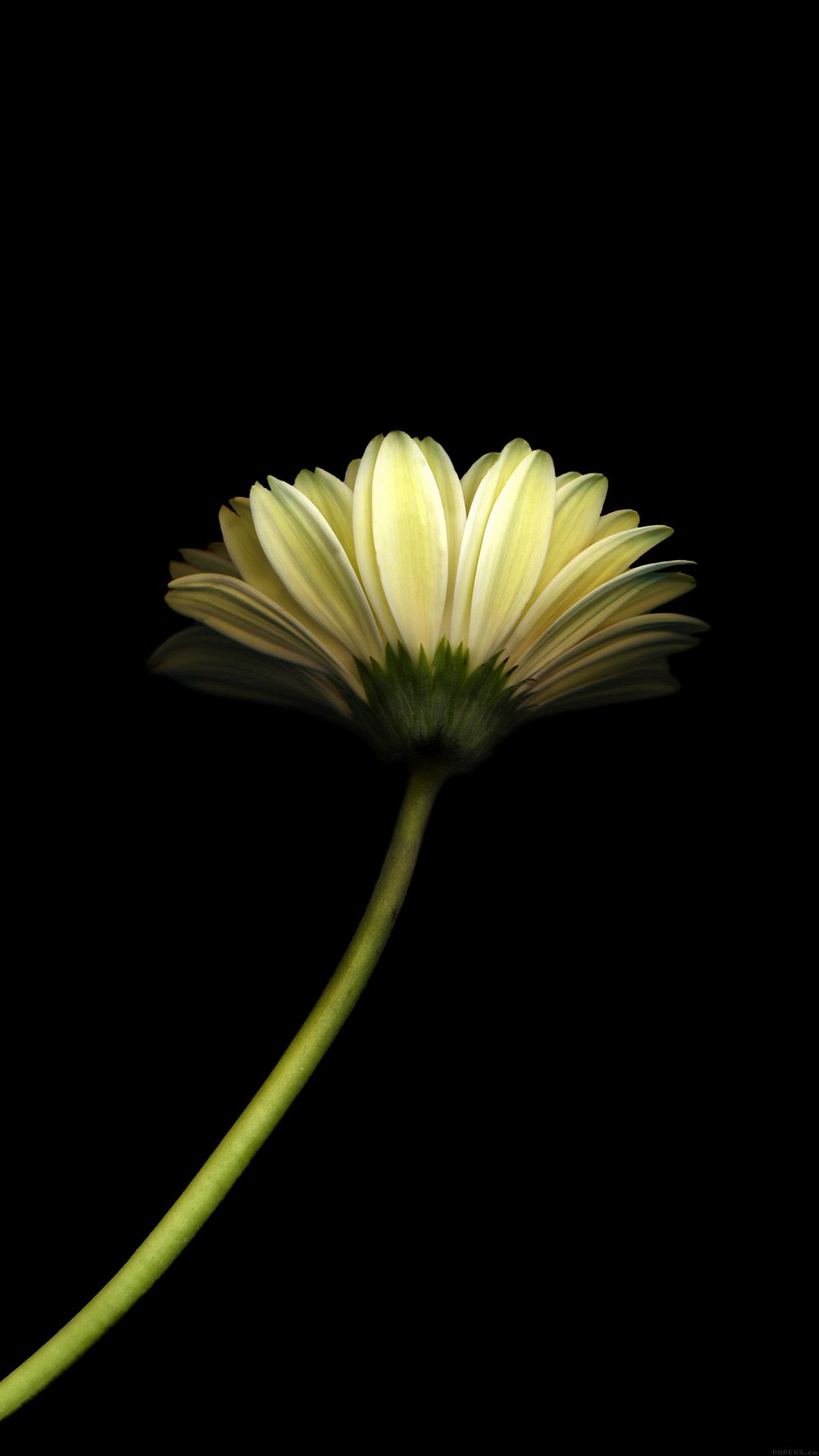 Kpop Girls Desktop Wallpaper Mk67 Lonely Flower Dark Simple Minimal Nature Papers Co