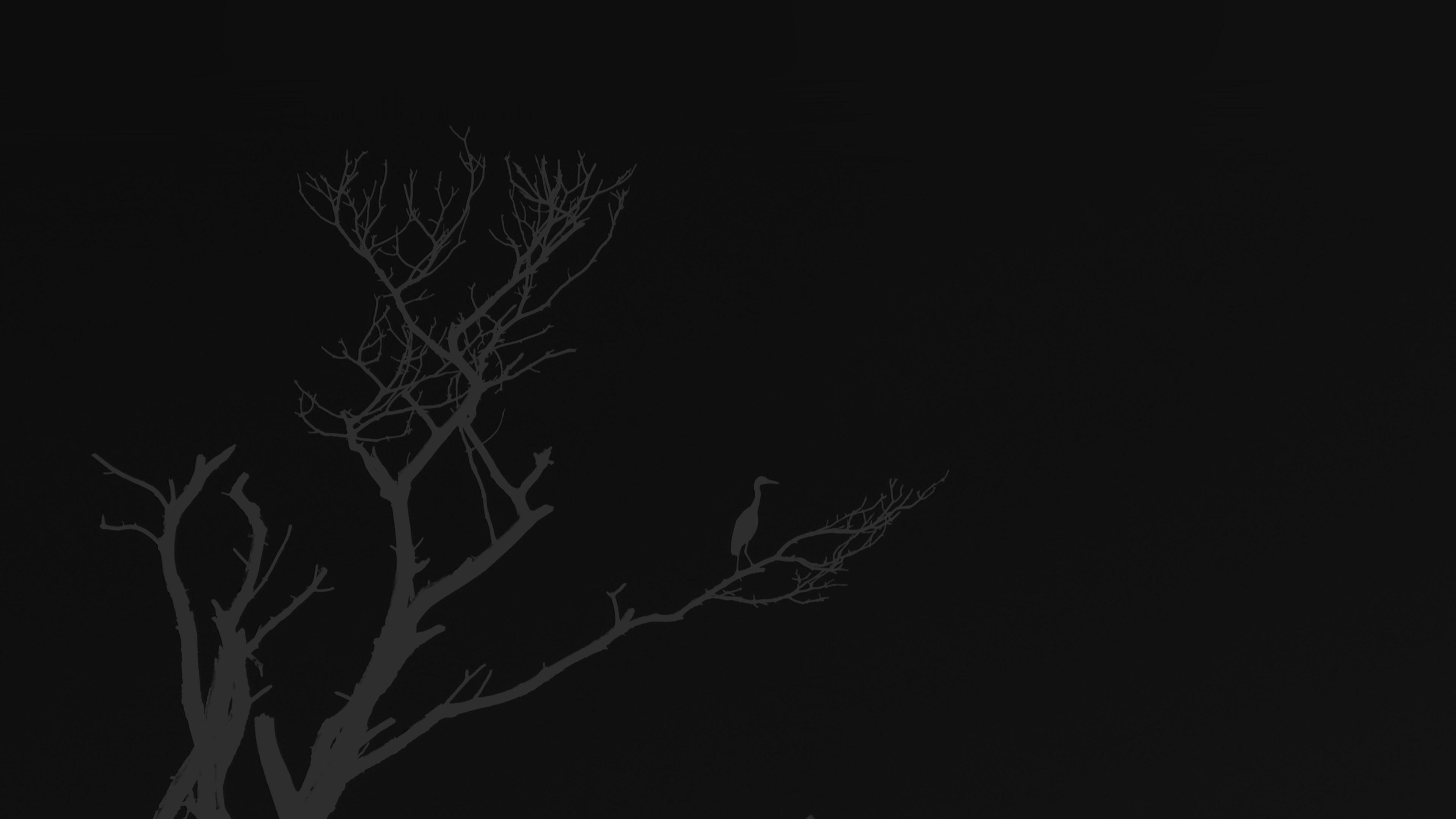 Iphone  Wallpaper Wallpaper For Desktop Laptop Mk98 Bird Sunset Tree Dark