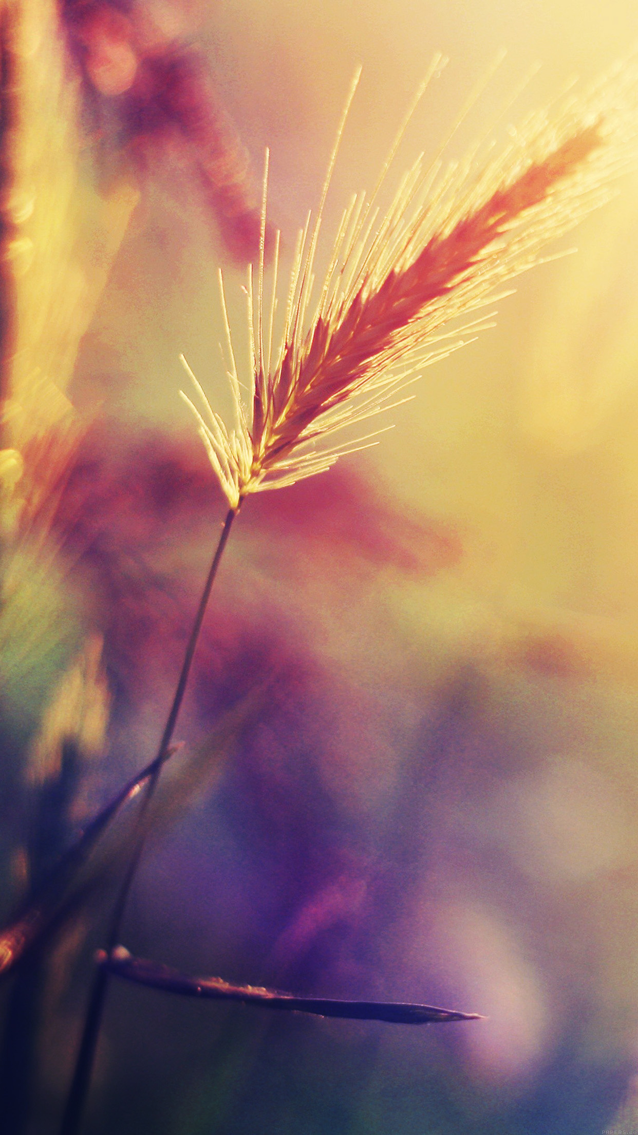 Sunrise Wallpaper Iphone 6 Papers Co Iphone Wallpaper Mm19 Sunset Reed Flower
