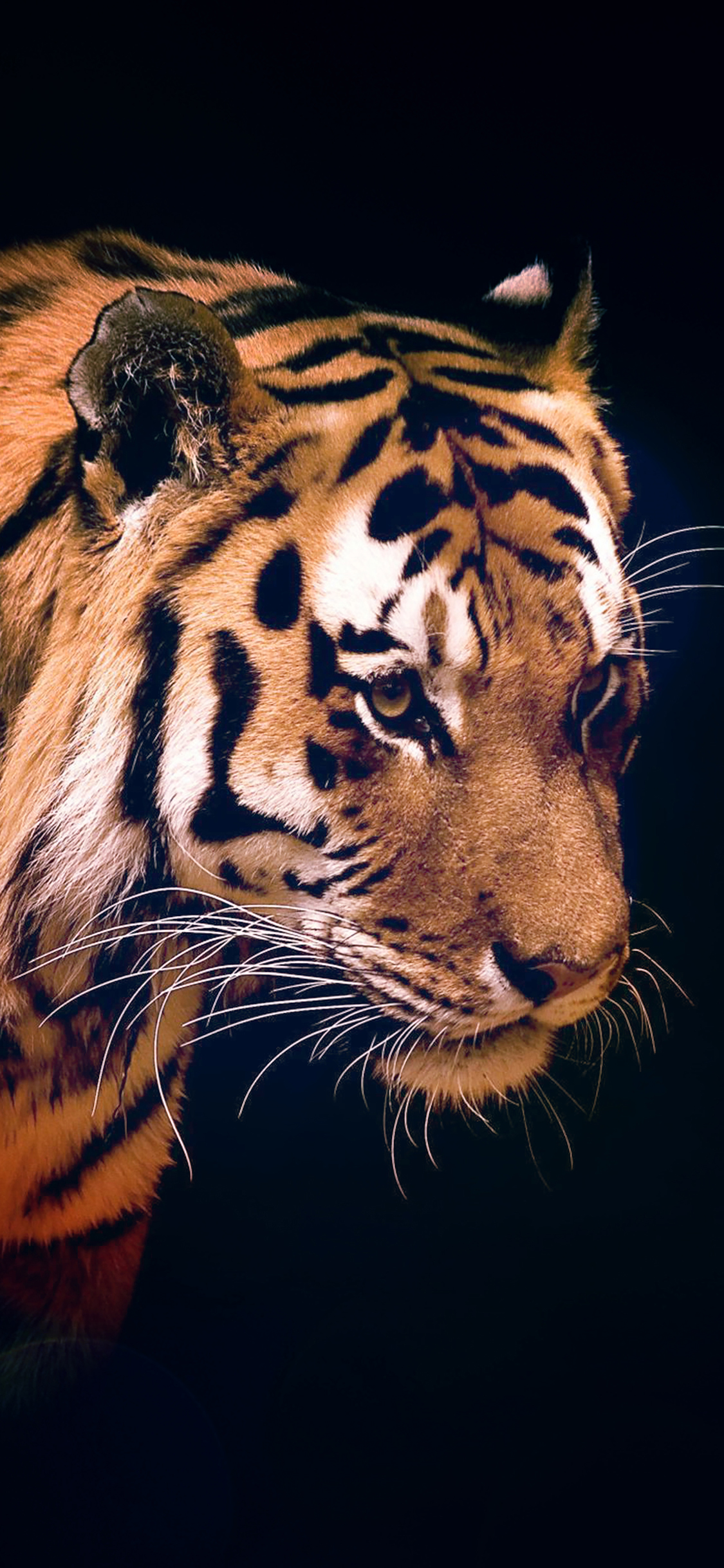 Animal Desktop Wallpaper Mm82 Tiger Dark Animal Love Nature Wallpaper