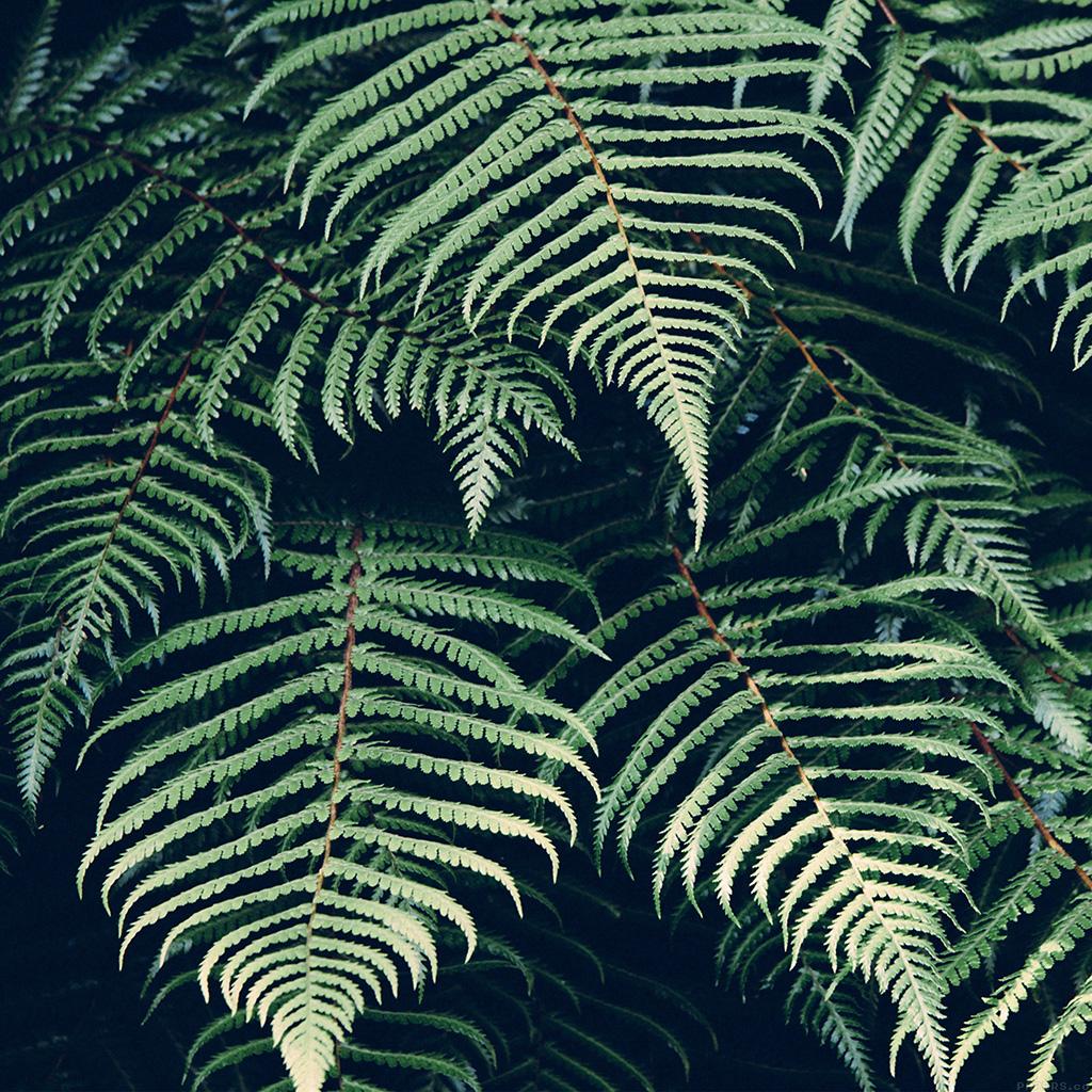 Fall Leaves Iphone 6 Plus Wallpaper Ipad Retina