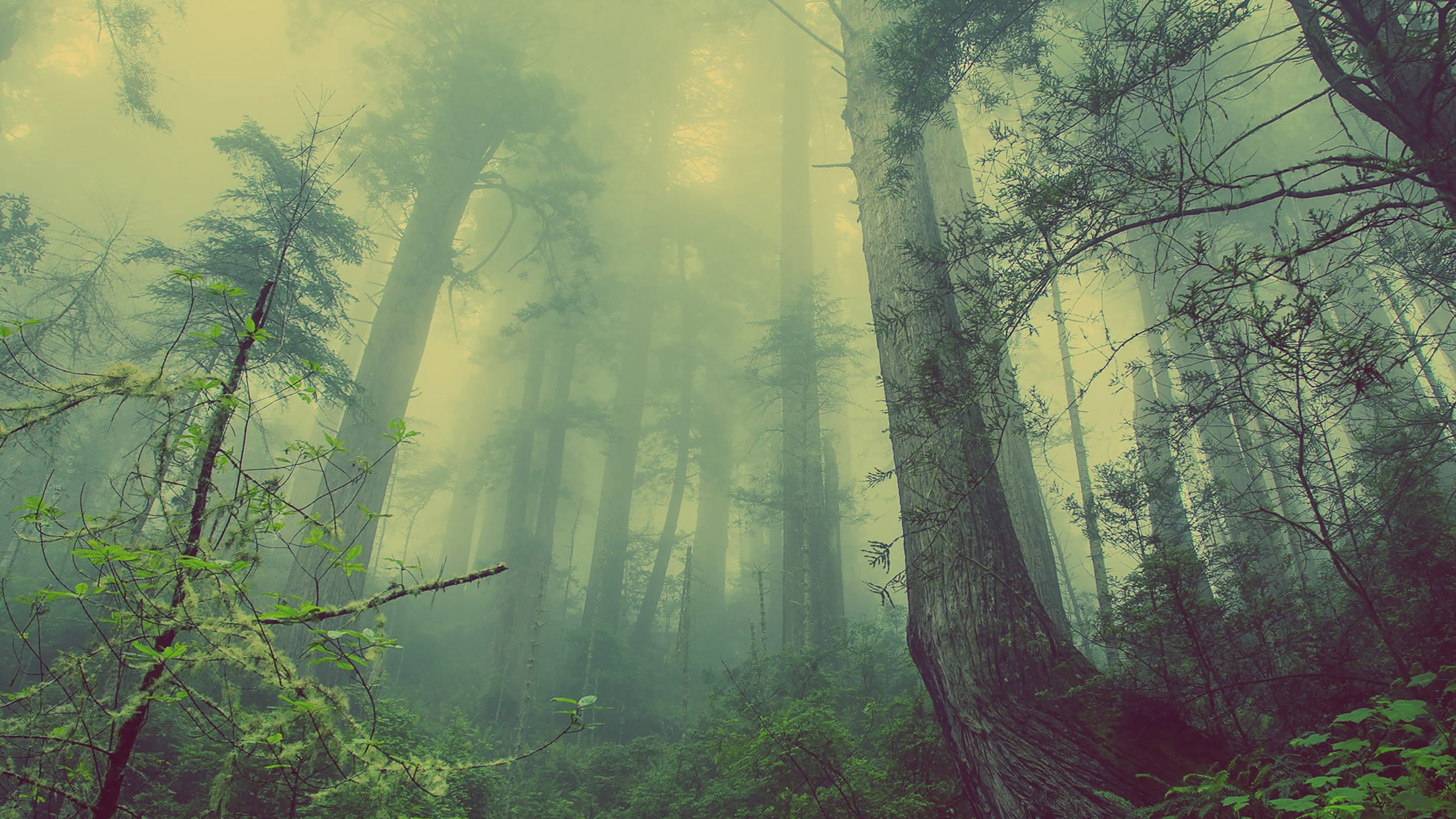 4k Laptop Wallpaper Fall Forest Mn31 Forest Wood Fog Nature Green Papers Co