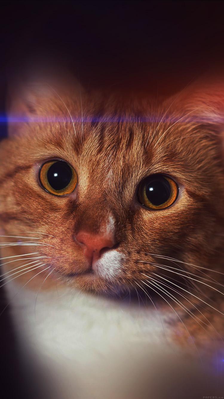Cat In Fall Wallpaper Ipad