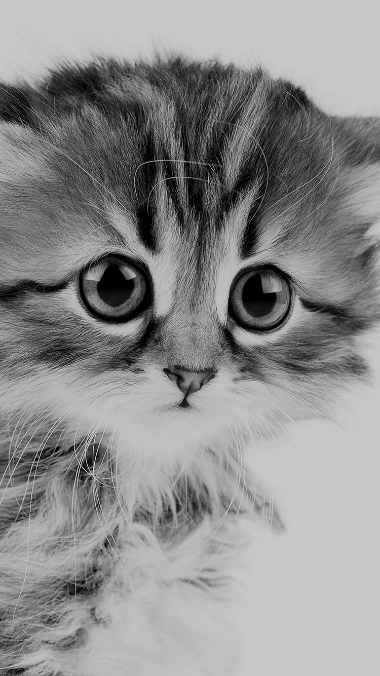 Cute Kitten Wallpaper For Ipad Iphone7papers Com Apple Iphone7 Iphone7plus Wallpaper Ms24