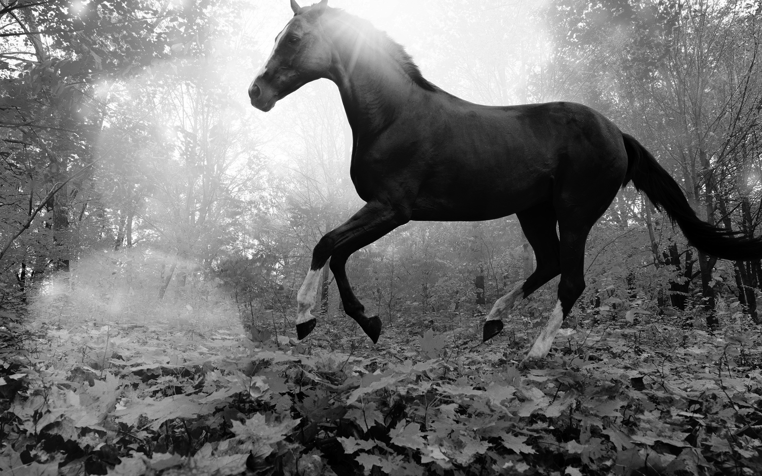 Laptop Wallpapers Fall Mt32 Horse Art Animal Fall Leaf Mountain Flare Dark Bw