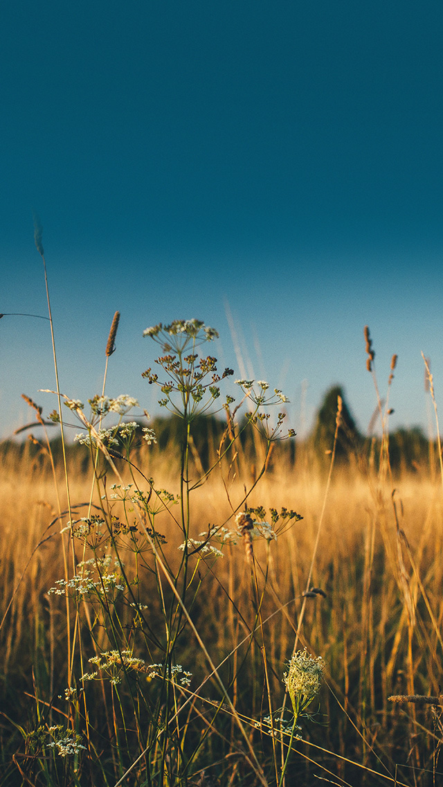 Wallpaper For Iphone 6 Fall Mx03 Fall Field Nature Flower Reed Sunny
