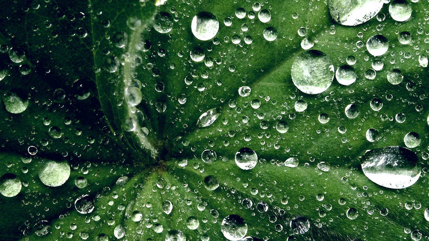 Fall Live Wallpaper Iphone My46 Water Drop On Leaf Summer Green Live Wallpaper