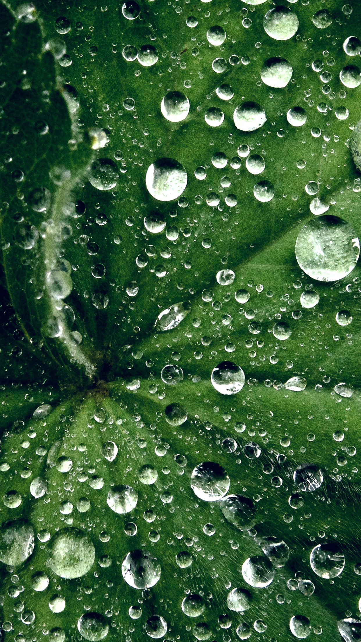 Live Photo Wallpaper Iphone Se My46 Water Drop On Leaf Summer Green Live Wallpaper
